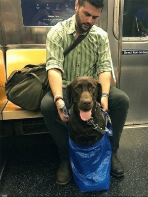 Animals, Casper, and Dogs: CASPER.COM  Donot lean on door Dogs in bags on the NYC subway just might be our newest obsession... #Animals #Dogs #NewYork #NYC