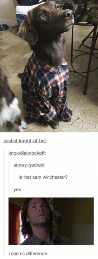 Memes, 🤖, and Winchester: castiel-knight-of-hell:  knoxvilleknockoff  snowy-gadreel:  is that sam winchester?  yes  I see no difference Doggo Winchester