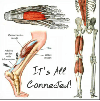 ASSESS THE SYSTEM, NOT JUST THE PART Everything in the body is 🔗 connected. Achilles tendinopathy is a great example of this. The Achilles tendon and calves are connected to the plantar fascia on one end and the hamstrings on the other. Weakness in the hamstrings is a known risk factor for Achilles tendinopathy. This weakness causes movement compensations that lead to extra loading on the Achilles. If you can't 🏃 propel yourself forward via hip extension, you may resort to pushing off more at the ankle and foot. This movement compensation ⤴ increases the stress on the Achilles and can overload the tendon. So when you want to fix an injury, you have to look beyond the site of pain. Attacking locally is a great place to start but you may need to move up or down the chain for long term resolution. You know what hurts, but you need to figure out WHY. Find the patterns. 🔎 Find the compensations. And often you'll find the solution. Tag a friend whose injured and share the wealth! MyodetoxOrlando Myodetox: Castrocnemius  musde  Tibia  Achilles  tendon  Soleus  with  muscle  inflammation  IT's All  Connected ASSESS THE SYSTEM, NOT JUST THE PART Everything in the body is 🔗 connected. Achilles tendinopathy is a great example of this. The Achilles tendon and calves are connected to the plantar fascia on one end and the hamstrings on the other. Weakness in the hamstrings is a known risk factor for Achilles tendinopathy. This weakness causes movement compensations that lead to extra loading on the Achilles. If you can't 🏃 propel yourself forward via hip extension, you may resort to pushing off more at the ankle and foot. This movement compensation ⤴ increases the stress on the Achilles and can overload the tendon. So when you want to fix an injury, you have to look beyond the site of pain. Attacking locally is a great place to start but you may need to move up or down the chain for long term resolution. You know what hurts, but you need to figure out WHY. Find the patterns. 🔎 Find the compensations. And often you'll find the solution. Tag a friend whose injured and share the wealth! MyodetoxOrlando Myodetox