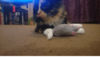 Mouse, Her, and Cat: Cat and mouse