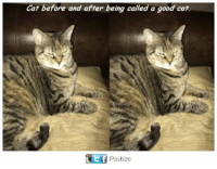 Memes, Good, and 🤖: Cat before and after being called a good cat.  GEtf Postize