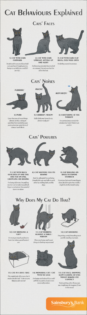 Being Alone, Cats, and Do It Again: CAT BEHAvioURS ExplAiNED  CATS FACES  2) CAT WITH EARS  UPRIGHT, SITTING UP  AND ALERT  1) CAT WITH EARS  3) CAT WITH EARS FLAT  BACK, EYES WIDE OPEN  FORWARD  Im pleased to see you.If you hold  outyour handImight give it a mlistening intently. Was it a bird  bump to say hello (or a sniffifIoramouse?Im not sure but Im  Im feeling scared or anxious  am shy)  offtofindout  CATS NOISES  MIAOW!  PURRRR!  MYIP!MYIP!  4) PURR  5) CHIRRUP /MIAOW  HellolWelcome home! Is my  dinnerready yet?  6) CHATTERING AT THE  WINDOW  I purr because of most things  (dinner strokes, sitting in  sunshine but mainly because  youúve given me some form of  I've spottedpreyoutside the  window but I dont think Ican  catch it  contact andI like it.   CATs PoSTURES  7) CAT WITH BACK  HUNCHED UP AND TAIL  AND FUR ON END,  8) CAT SHOWING YOU ITS  BEHIND  9) CAT ROLLING ON  BACK TO EXPOSE  STOMACH  GROWLING OR HISSINC Dont be offended Im just being  friendly We cats say hello toeach Itrust you but watchyour fingers  Im being defensive.lim puffing other by sniffing tails, just like ifyou decide to give me a tickle,I  dogs.  my hair out to make myselflook  bigger so whatever Im scaredof  leaves me alone.  might be in the mood to play.   Why DoEs My CAT Do THAr?  10) CAT BRINGING A  CIFT  12) CAT KNEADING  11) CAT RUBBING  AGAINST A TABLE /  PERSON  Imgetting comfy, kneading you is  just like needing mymum.  Im trying to teach you howto  hunt.See what a goodhunter  am.  This is my home andIscent  things to find mywayaround.  13) CAT IN A BoX / BAG 14) MONORAIL CAT CAT 15) CAT FACE, SHOWING  WITH NO LEGS  This might look silly to you, but it  makes me feel safe-Ican seeyou  but you cant seeme!  SLOW CLOSING OF EYES  WHILST MAKING EYE  CONTACT  Im happy and relaxed You could  call this mysphinx loaforeven  monorail position.  Youre getting akiss.Ifyou copy  me, Imightjust do it again.Iflam  in the mood  Sainsbury's Bank ceoolsson: americaninfographic:  Cat Behavior   a lot of people tend to confuse cats showing their belly for belly rubs, but it's actually only something dogs do, for cats its a sign of respect and trust, they are not expecting to get pet, so when they do it's not uncommon they get startled or think its play fight, of course there are expectations and some cats who ADORES belly rubs