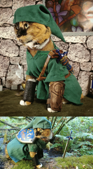cat-cosplay:  But then, when all hope had died, and the hour of doom seemed at hand…  …a young cat clothed in green appeared as if from nowhere.  Wielding the blade of evil's bane, they sealed the dark one away and gave the land light. : cat-cosplay:  But then, when all hope had died, and the hour of doom seemed at hand…  …a young cat clothed in green appeared as if from nowhere.  Wielding the blade of evil's bane, they sealed the dark one away and gave the land light.