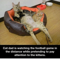 Cats, Dad, and Meme: Cat dad is watching the football game in  the distance while pretending to pay  attention to the kittens. Or Mom watching her stories...or the game :-) Via Grumpy Cat Memes