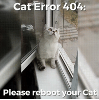 A problem has been detected and windows has been shutdown to prevent damage to your computer: Cat Error 404.  Please re  your Cat A problem has been detected and windows has been shutdown to prevent damage to your computer