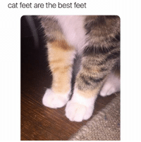 Funny, Best, and Feet: cat feet are the best feet And it can turn into deadly weapon