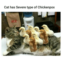 Cat has Severe type of Chickenpox Get well soon cat. | For more @aranjevi