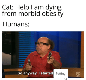 Puffles never lived to see another day...: Cat: Help I am dying  from morbid obesity  Humans:  So anyway, I started Petting Puffles never lived to see another day...