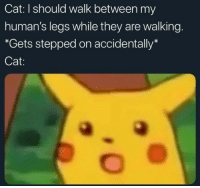 "Cat, They, and Humans: Cat: I should walk between my  human's legs while they are walking.  ""*Gets stepped on accidentally*  Cat:"