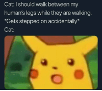 Cat, They, and Humans: Cat: I should walk between my  human's legs while they are walking.  *Gets stepped on accidentally*  Cat: