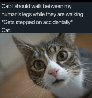 Why master?: Cat: I should walk between my  human's legs while they are walking.  *Gets stepped on accidentally*  Cat: Why master?