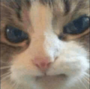 Cat is mad seeing all the crying cat memes: Cat is mad seeing all the crying cat memes