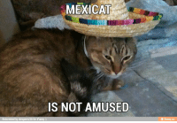 Not Amused: CAT  IS NOT AMUSED  Reinvented by alexperez56 for iFunny  ifunny.co