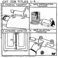 Massage, Memes, and Cartoon: CAT JOB TITLES 1-4  S 1. MASSAGE THERAPIST  D SOCK DISTRIBUTION  MANAGER  DRIP COLLECTION  E13. CUPBOARD INSPECTOR  4  OPERATIVE  RF  FACETSook COM/ ON THE PROwL CAT CARTOONS Cat Job Titles... #Cats #Ontheprowl #Rupertfawcett