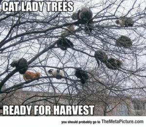 Tumblr, Blog, and Trees: CAT LADY TREES  READY FOR HARVEST  you should probably go to TheMetaPicture.com lolzandtrollz:  So This Is Where They Get Them