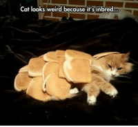 For More Hit (Y)  Dirty Humor  OR Unlawful jokes: Cat looks weird because it's inbred For More Hit (Y)  Dirty Humor  OR Unlawful jokes