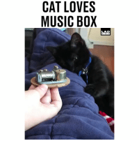Go to Sleep, Love, and Memes: CAT LOVES  MUSIC BOX  LAD  BIRLE 'When Osiris was a baby he used to love this little music box and even now 8 months later he still likes for me to play music like this when we go to sleep at night' 🐱😴😍