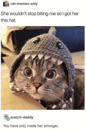 : cat-memes-only  She wouldn't stop biting me so I got her  this hat  snatch-daddy  You have only made her stronger.