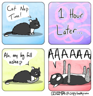 Cat Loaf Static [OC]: Cat Nap  1 Hour  Time!  Later..  AA  Ah, my leg fll  asleep d  @copy bookpizza Cat Loaf Static [OC]
