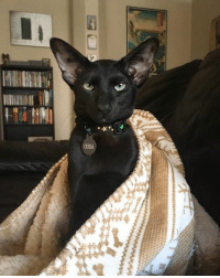 Cat or house elf?: Cat or house elf?