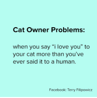 "real 🐱: Cat Owner Problems:  when you say ""i love you"" to  your cat more than you've  ever said it to a human.  Facebook: Terry Filipowicz real 🐱"