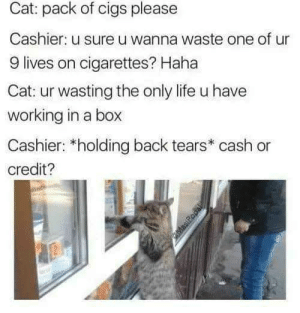Dank, Life, and Memes: Cat: pack of cigs please  Cashier: u sure u wanna waste one of ur  9 lives on cigarettes? Haha  Cat: ur wasting the only life u have  working in a box  Cashier: *holding back tears* cash or  credit? Never try to outwit an Alleycat! by CharlieBronsonsGhost MORE MEMES