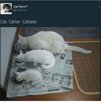 Doctor, Meme, and Memes: Cat Porn  TM  CatPornx  Cat. Catter. Cattest. Daily cat memication (one cat meme a day keeps the doctor away) -C