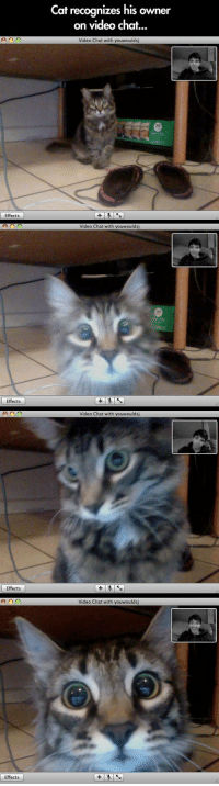 Human, why are you trapped in my butt warming machine?: Cat recognizes his owner  on video chat..  Video Chat with youwoulds  Effects  Video Chat with youwoulds  70  Effects  Video Chat with youwouldsj  Effects  Video Chat with youwoulds  Effects Human, why are you trapped in my butt warming machine?
