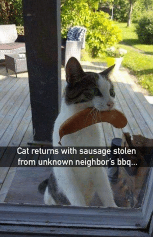 sausage: Cat returns with sausage stolen  from unknown neighbor's bbq...