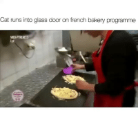 Funny, Lmao, and French: Cat runs into glass door on french bakery programme  MIDI  lot Atleast EDIT it out lmao