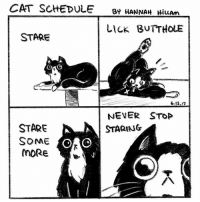 Memes, Some More, and Bear: CAT SCHEDULE  By HANNAH  HiwAm  LICK BUTTHOLE  STARE  OSO  6.12.7  NEVER STOP  STARE  STARING  SOME  MORE my cat Bear stares at me, unblinking, all day