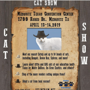 Cats, Memes, and Molly: CAT SHOW  MESQUITE TEXAS CONVENTION CENTER  1700 RoDEG DR. MESQUITE TX  APRIL 13-14,2019  Meet our mascot Catntp and up to 50 breeds of cats,  including Bengals, Devon Rex, Sphynx, and more!  Learn about little and BIG cats at our education booth  Talks by Molly DeVoss, In-Sync Exotics, and others!  Shop at the many vendors selling unique items!  Adopt a cat from local rescures!  Faline  Foundation  110-L-077z Come see us this weekend. We will have kittens and cats up for adoption. Saturday is from 9:30-4:30 and Sunday is 9:30-3:30.