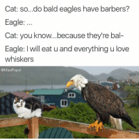 Philadelphia Eagles: Cat: so...do bald eagles have barbers?  Eagle:  Cat: you know... because they're bal-  Eagle: Iwill eat u and everything u love  whiskers  @Masi Popal