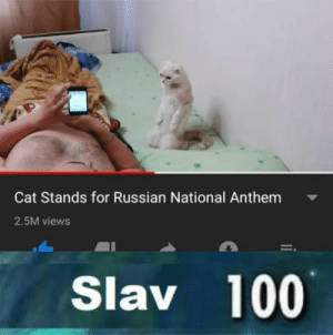 He gets it: Cat Stands for Russian National Anthem  2.5M views  Slav 100 He gets it