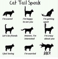 Upseted: Cat Tail Speak  I'm happy  I'm scared  I'm getting  upset  to see you  Let's be friends  Hmmm. I'm  I'm crazy  about you  interested  I feel loving  I'm worried