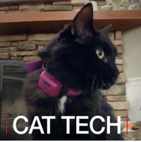 Cats, Memes, and Pets: CAT TECH 16 FEB: Here is a sneak peek at the latest tech for your cat. For more: bbc.in-cattech BBCClick Cats Gadgets Pets Technology AnimalLove BBCShorts BBCNews @BBCNews