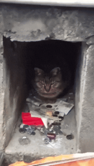 Cat, Toll, and Collector: Cat toll collector