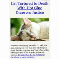 Cat Tortured to Death With Hot Glue Deserves Justice Someone