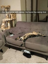 Cats, Cute, and Memes: Cat tree came with catnip...he found the catnip first  eitastetulyoffensive For more cute pics LIKE us at The Purrfect Feline Page