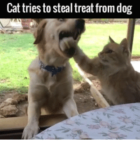 Dank, 🤖, and Dog: Cat tries to steal treat from dog This is what instant regret looks like 😂😂