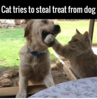 Cats, Dank, and Dogs: Cat tries to steal treat from dog This is what instant regret looks like! 😂🐶🐱