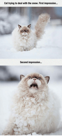 "<p>Cat Vs. Snow.<br/><a href=""http://daily-meme.tumblr.com""><span style=""color: #0000cd;""><a href=""http://daily-meme.tumblr.com/"">http://daily-meme.tumblr.com/</a></span></a></p>: Cat trying to deal with the snow. First impression...  Second impression... <p>Cat Vs. Snow.<br/><a href=""http://daily-meme.tumblr.com""><span style=""color: #0000cd;""><a href=""http://daily-meme.tumblr.com/"">http://daily-meme.tumblr.com/</a></span></a></p>"