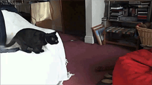 Cat V.S. Bean Bag Chair: Cat V.S. Bean Bag Chair