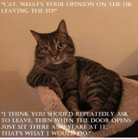 "Brexit: ""CAT, WHAT'S YOUR OPINION ON THE UK  LEAVING THE EU?""  ""I THINK YOU SHOULD REPEATEDLY ASK  TO LEAVE, THEN WHEN THE DOOR OPENS  JUST SIT THERE AND STARE AT IT  DO  THAT'S WHAT I WOU Brexit"