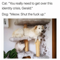"Cats, Dogs, and Fucking: Cat: ""You really need to get over this  identity crisis, Gerald.""  Dog: ""Meow. Shut the fuck up."" Comment which animal you like more. Dogs or cats? I fucking hate cats I'm dogs alllll the way"