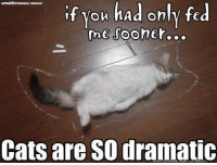 Memes, Mouse, and 🤖: cataddictsanony-mouse  f you had only fed  me sooner  Cats are SO dramatic #crazycatladiesunite #funny #cats