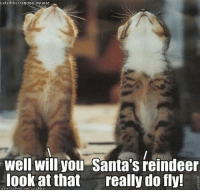 "Countdown, Memes, and Mouse: cataddictsanony mouse  well will you Santa's reindeer  look at that  really do fly! ""The countdown is on throughout the world, Santa is on his way..."" ~Sonja"