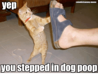 poop gif: cataddictsanony-mouse  yep  you stepped in dog poop