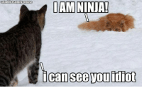 "If you like this - please ""like"" our page http://www.facebook.com/WhatYouToo: cataddictsanonyHmouse  I AM NINJA!  icaanseevou idiot If you like this - please ""like"" our page http://www.facebook.com/WhatYouToo"