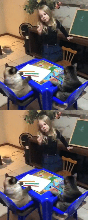catchymemes:Little girl teaching her cats how to draw a flower: catchymemes:Little girl teaching her cats how to draw a flower